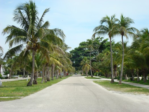 Palm Lined Path